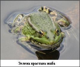 Разглеждате: Природа